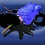 mavi-gul-resimleri10