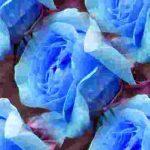 mavi-gul-resimleri2