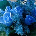 mavi-gul2