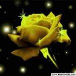 parlayan_sari_gul