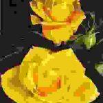 sari-gul-resmi