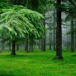 Rüyada Yeşil Alan Görmek