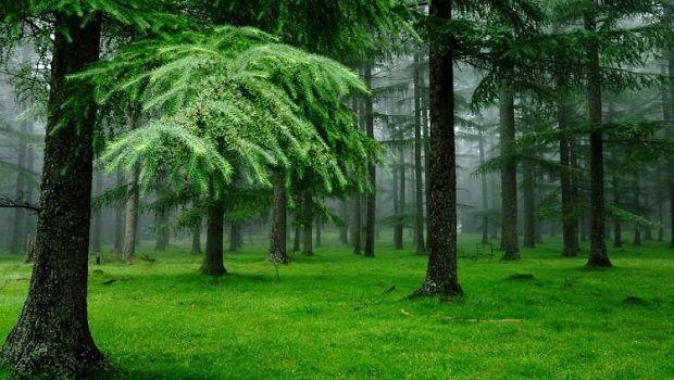 Rüyada Yeşil Alan Görmek Ne Anlama Gelir