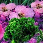 Sivilce nasıl geçer bitkisel çözüm