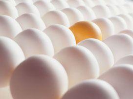 Günde iki Yumurta Zayıflatıyor