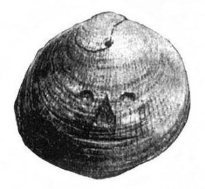 deniz-kabugu