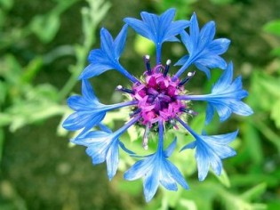 mavi-kantaron