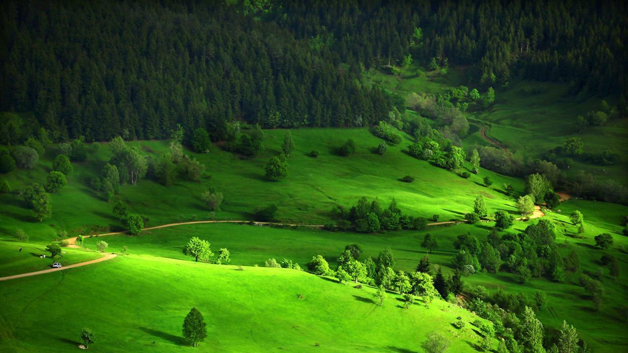 Rüyada Yeşil Alan Görmek Ne Anlama Gelir?