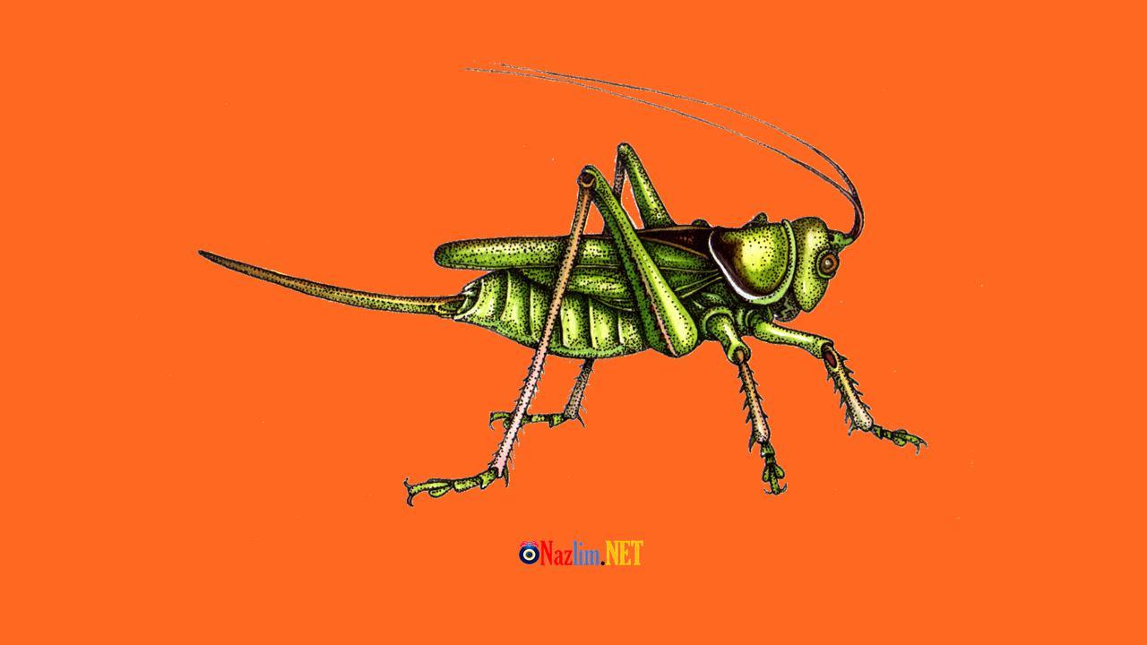 Rüyada Cırcır Böceği Görmek Ne Anlama Gelir?