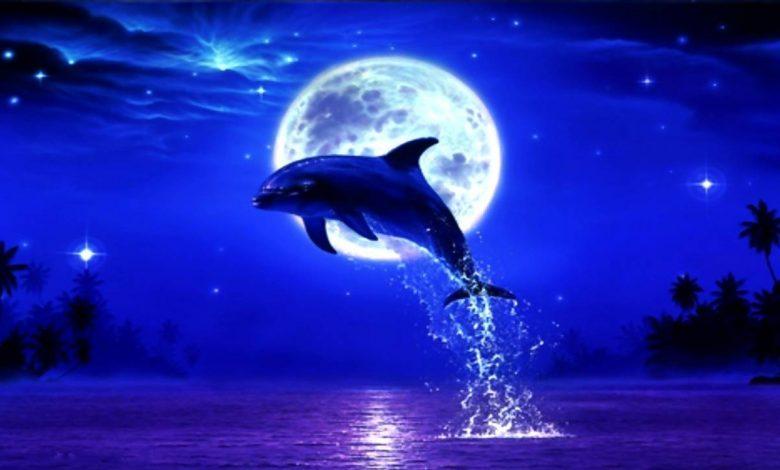 Rüyada Yunus Balığı Görmek Ne Anlama Gelir?