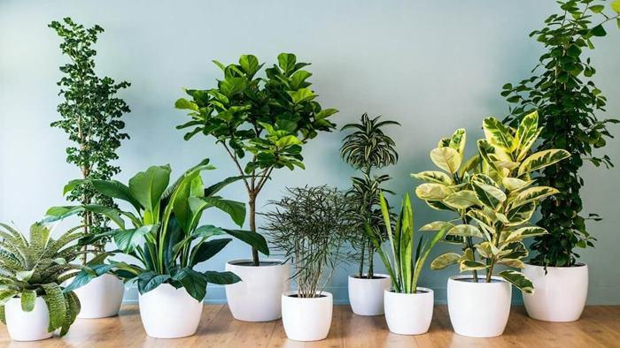 Burçların Bitkileri