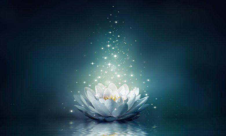 Çiçek ve Su Hikayesi