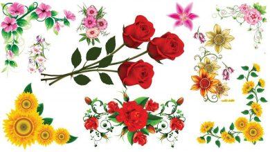 Photo of Çiçeklerin Dili ve Anlamları