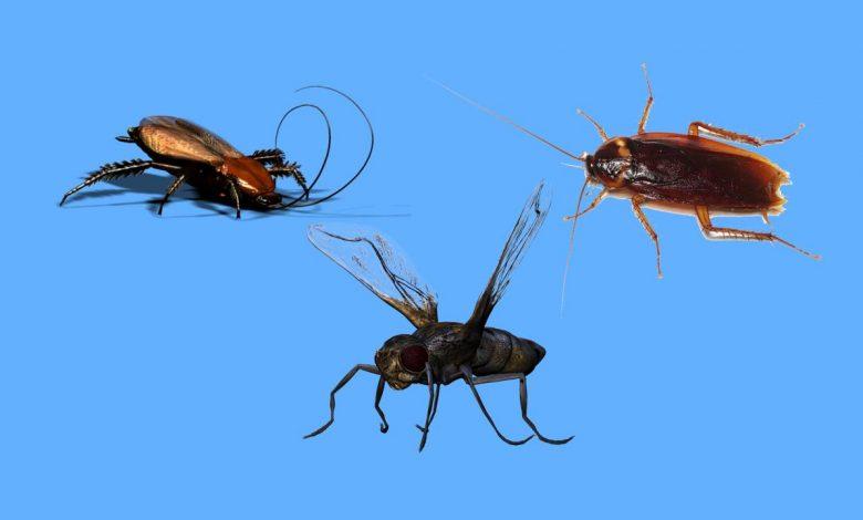 Rüyada böcek görmek ne demek?