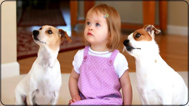 Bir arkadaşınızın köpeğini 1 yada 2 gün bakmak için eve getirin
