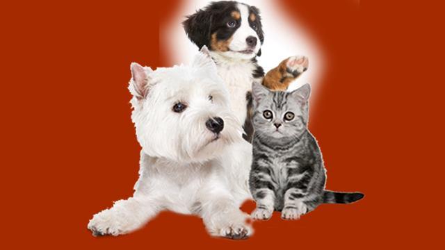 Onlara komik köpek, kedi videolarını gösterin