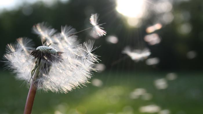 Rüyada rüzgar görmek
